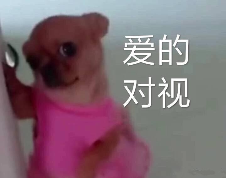 狗子表v动态的对视微信动态表情包吃搞恶表情饼图片