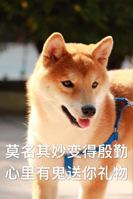 柴犬男生表情自我检讨表情微信表情思考微表情求博图片包图片