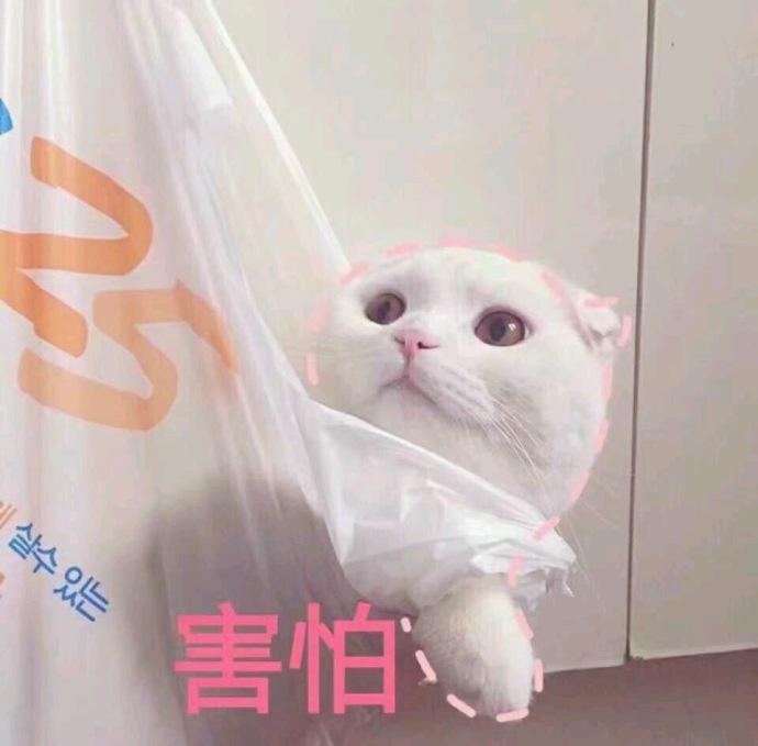 搞笑表情表情害怕猫咪微信照片斜脸图片表情表情图片