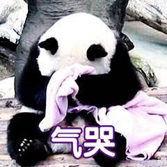 气哭表情包生气表情包熊猫表情包.jpg