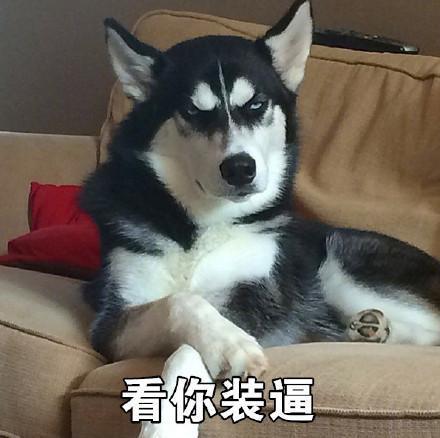 看你装逼表情微信表情表情狗子二哈表情.jpg
