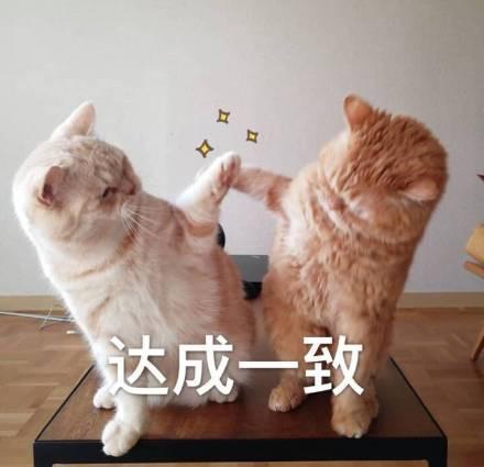达成一致表情微信表情猫咪表情.jpg