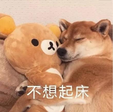 狗子表情微信表情不想起床表情.jpg