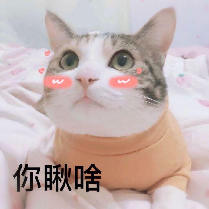 你愁啥表情微信表情猫咪表情.jpg