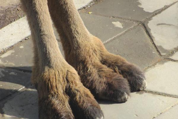骆驼趾是什么意思.jpg