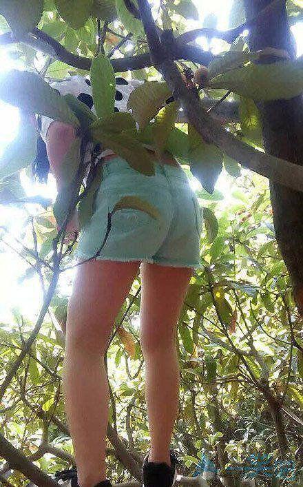 发现一只会上树的搞笑头像妹子