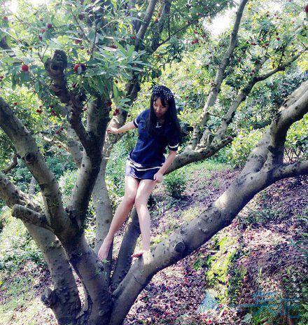 会美女恶搞图片爬树的妹子真的不多了